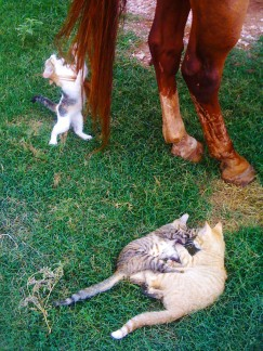 Barn Cat's kits
