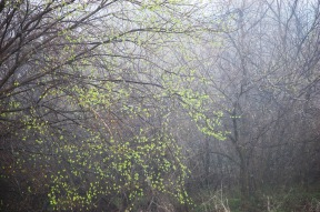 woods in spring