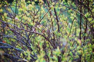 spring bursting forth