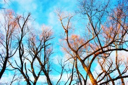 sunlight in a winter wood