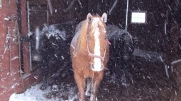 Taz the Horse